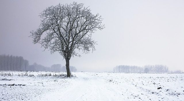 Tree in a snowy field.