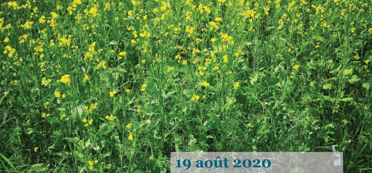 2019/2020 annual report