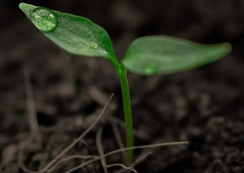 Announcing 2019 ECODA projects and principal investigators
