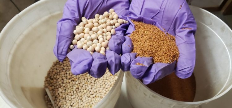 Photo of seeds being held in a person's hands.